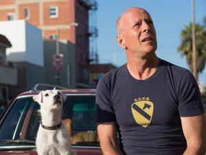 Брюс Уиллис и ещё 11 героев, доказавших что человек собаке друг