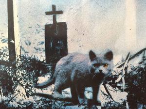 Съёмки нового «Кладбища домашних животных» перенесли на июнь